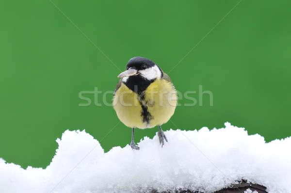 Little tit sitting on snowy branch Stock photo © asturianu