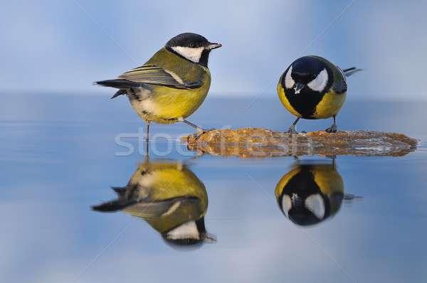 売り言葉 水 鳥 鳥 飲料 ストックフォト © asturianu
