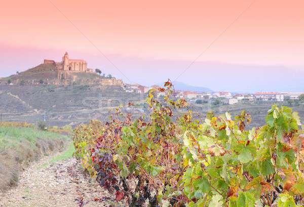 Vineyards in La Rioja, Spain. Stock photo © asturianu