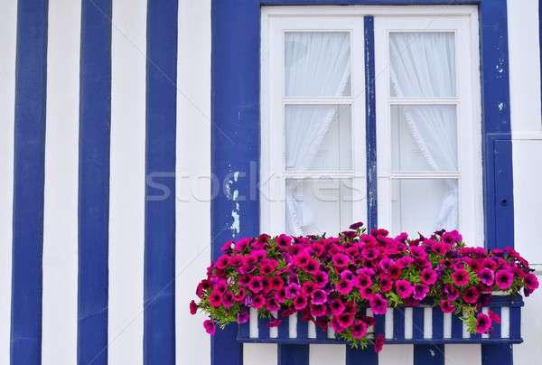Okno stary dom odznaczony kwiat piękna fioletowy Zdjęcia stock © asturianu