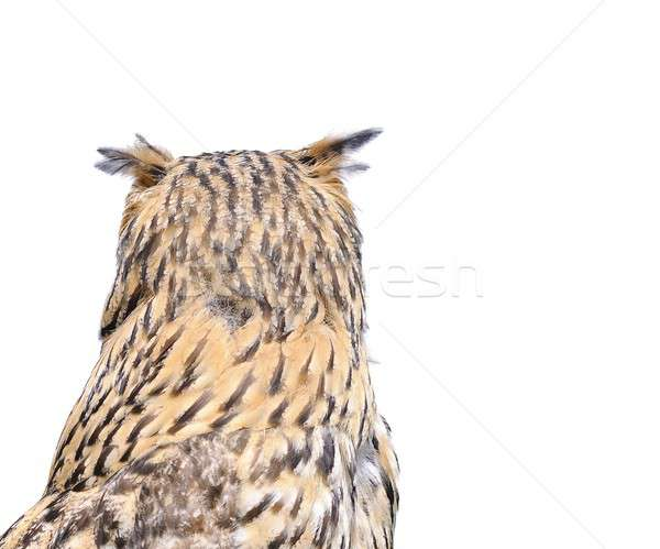 Isolé eagle owl blanche animaux chouette Photo stock © asturianu