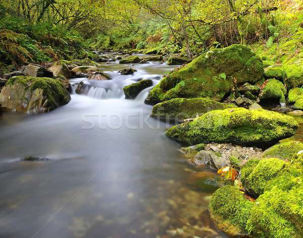 Jedwabiu rzeki wody tekstury drzewo wiosną Zdjęcia stock © asturianu