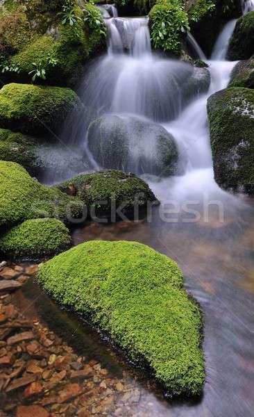 Charakter rezerwa wodospady rzeki piękna zielone Zdjęcia stock © asturianu