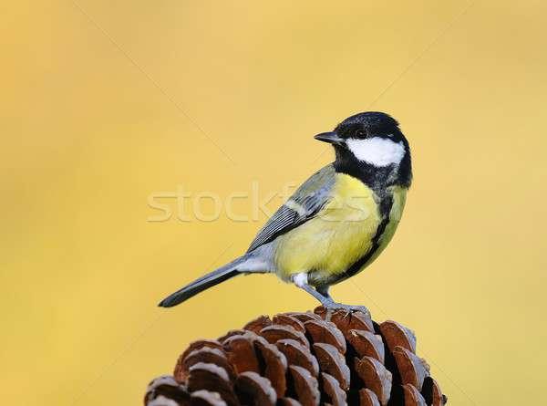 Tit Pióro ptaków zwierząt oddziału Zdjęcia stock © asturianu