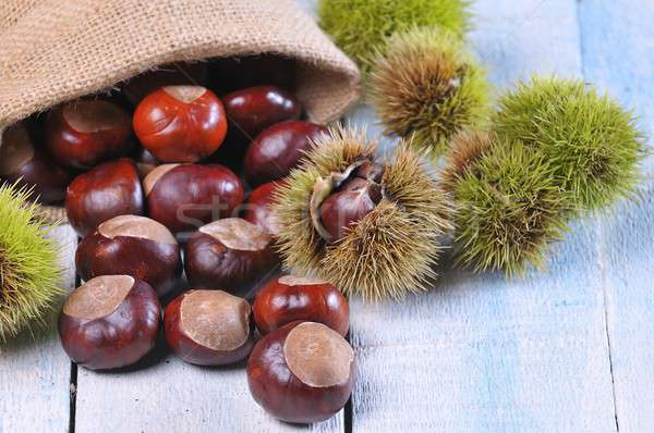 Chestnuts. Stock photo © asturianu