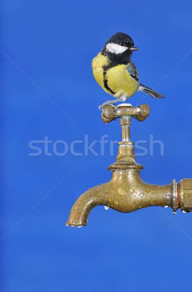Bird drinking water. Stock photo © asturianu