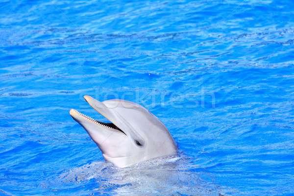 Yunus parlak mavi su güzel mutlu Stok fotoğraf © asturianu