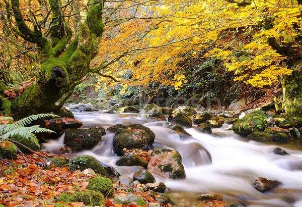 Autumn. Stock photo © asturianu