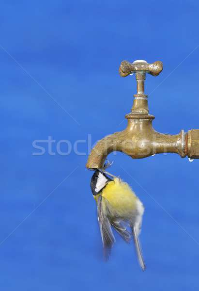 Thirsty. Stock photo © asturianu
