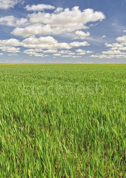 Agriculture. Stock photo © asturianu