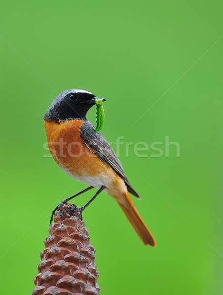 Hayatta kalma kuş tırtıl doğa turuncu yeşil Stok fotoğraf © asturianu