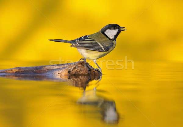 Тит питьевая вода пруд свет Сток-фото © asturianu