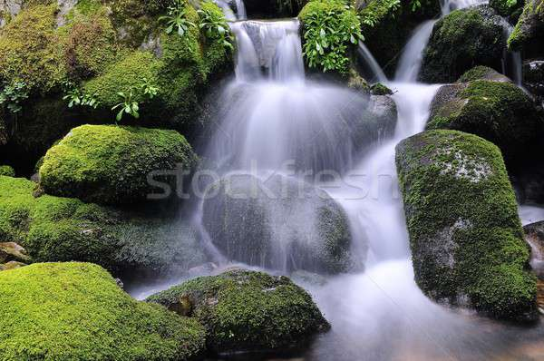 Waterfall Stock photo © asturianu
