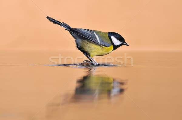 売り言葉 鳥 鳥 色 動物 ストックフォト © asturianu