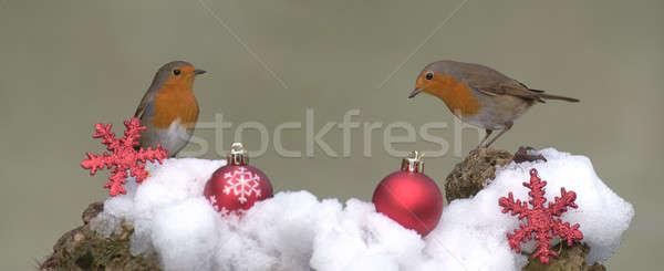 Robins. Stock photo © asturianu