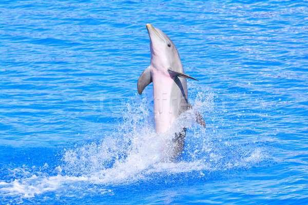 дельфин ярко синий воды красивой Сток-фото © asturianu