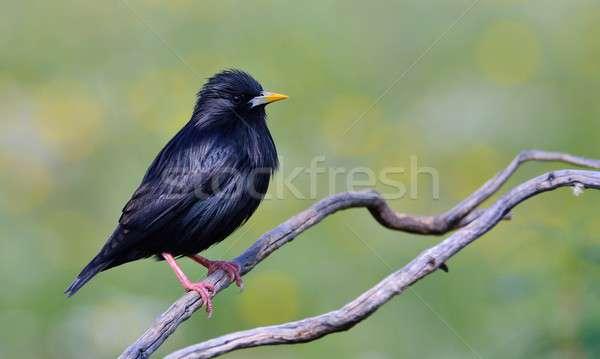 Feddhetetlen ág zöld természet madár állat Stock fotó © asturianu