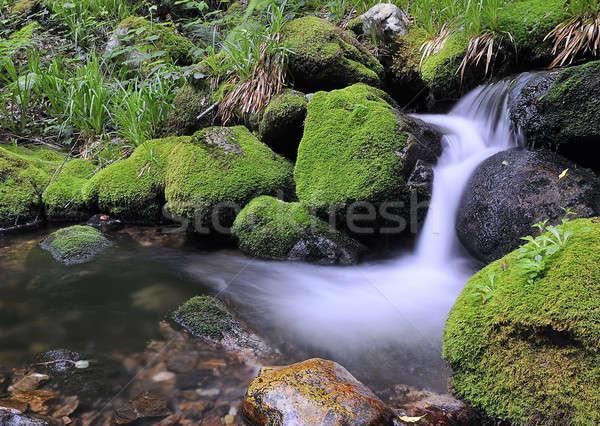 River in Muniellos. Stock photo © asturianu