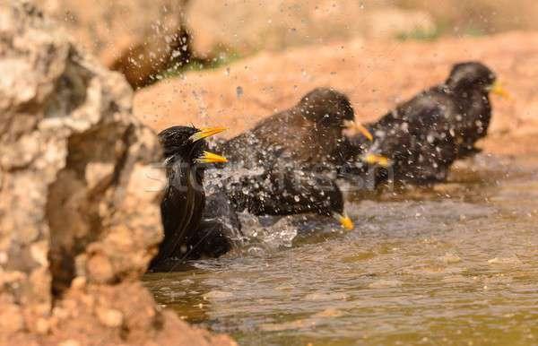 Néhány feddhetetlen fürdik tavacska vidék tavasz Stock fotó © asturianu