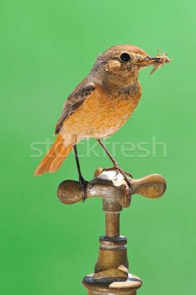 Alimentare amp bere uccello acqua natura Foto d'archivio © asturianu