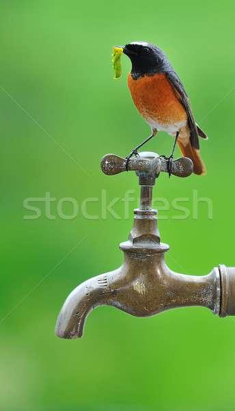 Foto stock: Caça · jardim · pássaro · planeta · potável · fonte