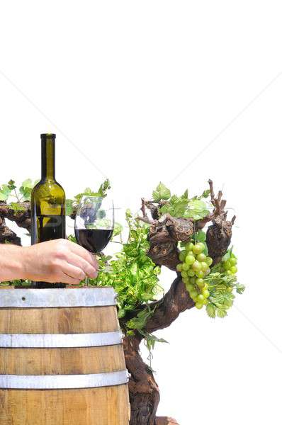 Red wine. Stock photo © asturianu