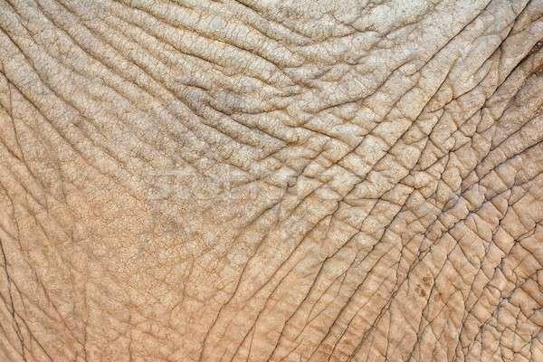 Ráncos elefánt bőr közelkép durva textúra Stock fotó © asturianu