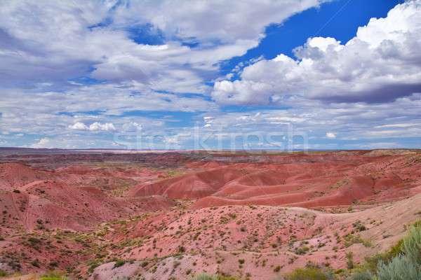 Lasu parku USA charakter malowany pustyni Zdjęcia stock © asturianu