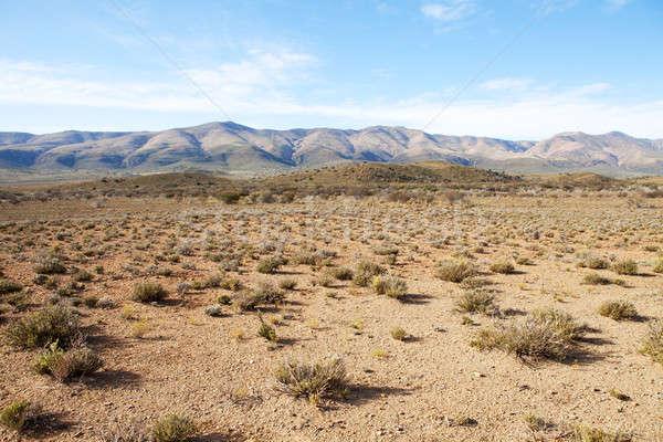地域 山 青空 南アフリカ 山 青 ストックフォト © avdveen