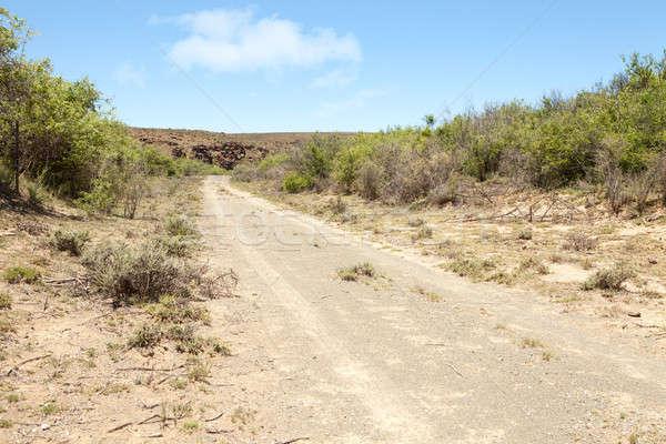 Dirt road leading towards rocky hill in arid region Stock photo © avdveen
