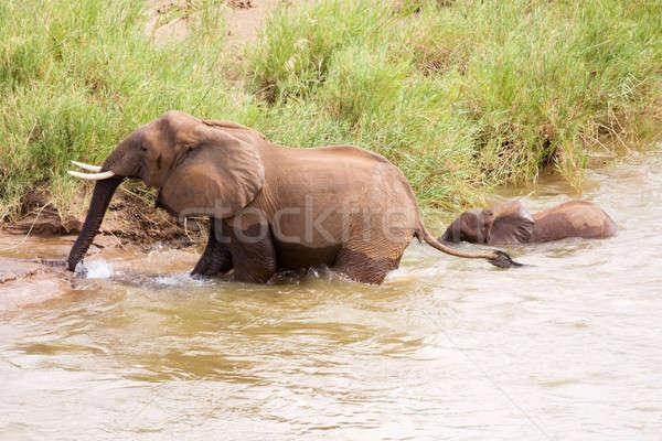 赤ちゃん 象 母親 水 太陽 自然 ストックフォト © avdveen