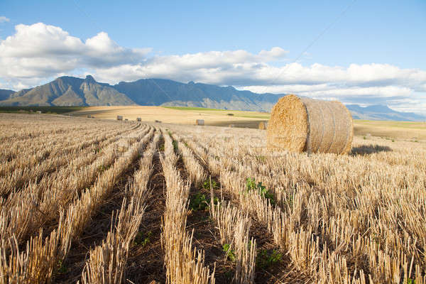 Hay bales lying in a field against mountain backdrop Stock photo © avdveen