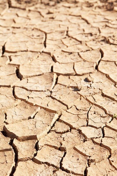 Dry cracked mud in dried up waterhole Stock photo © avdveen