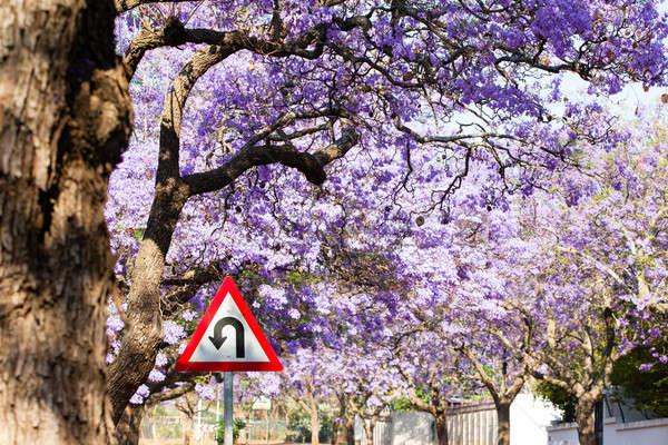 Znak drogowy piękna fioletowy kwiaty drogowego Zdjęcia stock © avdveen