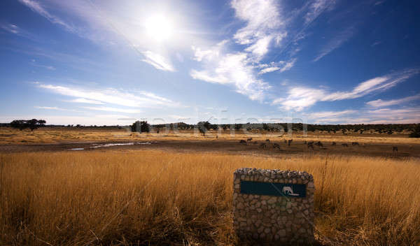 Pano landscape of watering hole in Kgalagadi Stock photo © avdveen