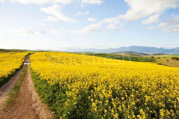 Toprak yol çiftlik uzak alanları gökyüzü Stok fotoğraf © avdveen