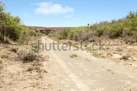 Dirt road on farm in arid region Stock photo © avdveen