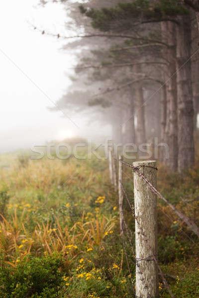 Hat ağaçlar buğu çit yol orman Stok fotoğraf © avdveen