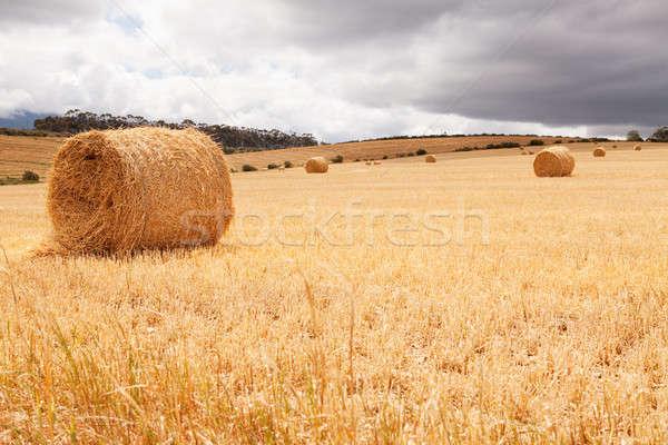 Hooi leggen veld stormachtig weide hemel Stockfoto © avdveen