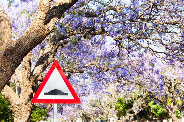 Triangular road sign warning of speed bump against purple jacara Stock photo © avdveen