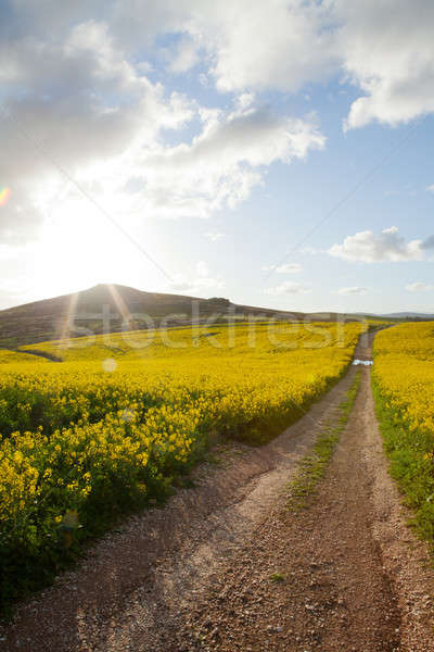 Mezők késő délután napfény földút nyár Stock fotó © avdveen