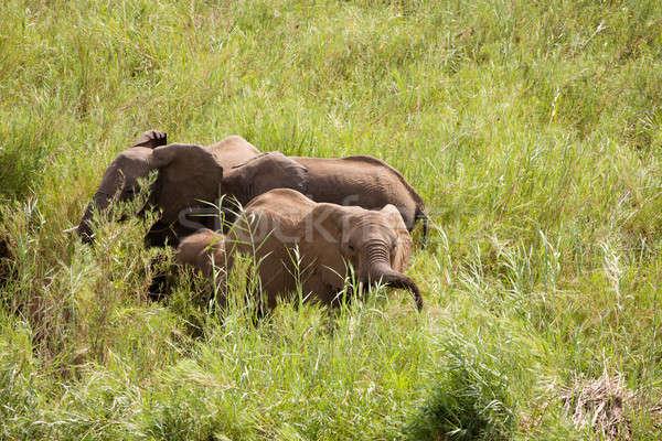 Drie afrikaanse olifanten rivieroever familie moeder Stockfoto © avdveen