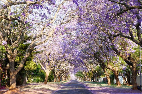 通り 南 市 美しい 紫色 ストックフォト © avdveen