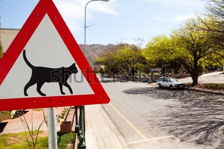 Stock fotó: Jelzőtábla · figyelmeztetés · macskák · fém · keret · felirat