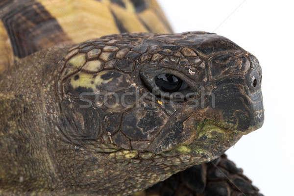 Kaplumbağa kafa doku doğa arka plan Stok fotoğraf © AvHeertum