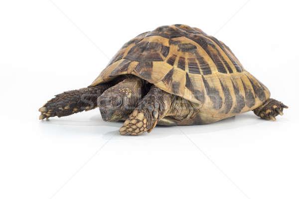 Stockfoto: Grieks · grond · schildpad · textuur · natuur · achtergrond