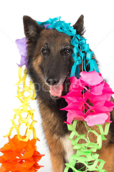 Dog with garlands Stock photo © AvHeertum