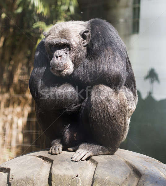 Monkey Stock photo © AvHeertum