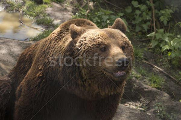 Mond portret tanden hoofd dierentuin Stockfoto © AvHeertum