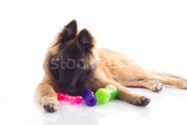 Foto stock: Cachorro · seis · meses · velho · brilhante